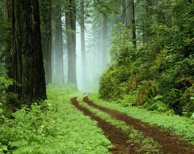 Հետաքրքիր հոգեբանական թեստ. անտառ, կենդանի, ջուր...